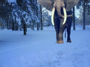norsk-elefant
