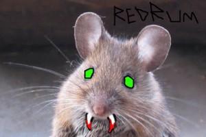 killer-mouse-1