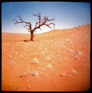 desert-tree-sophie-jacobson