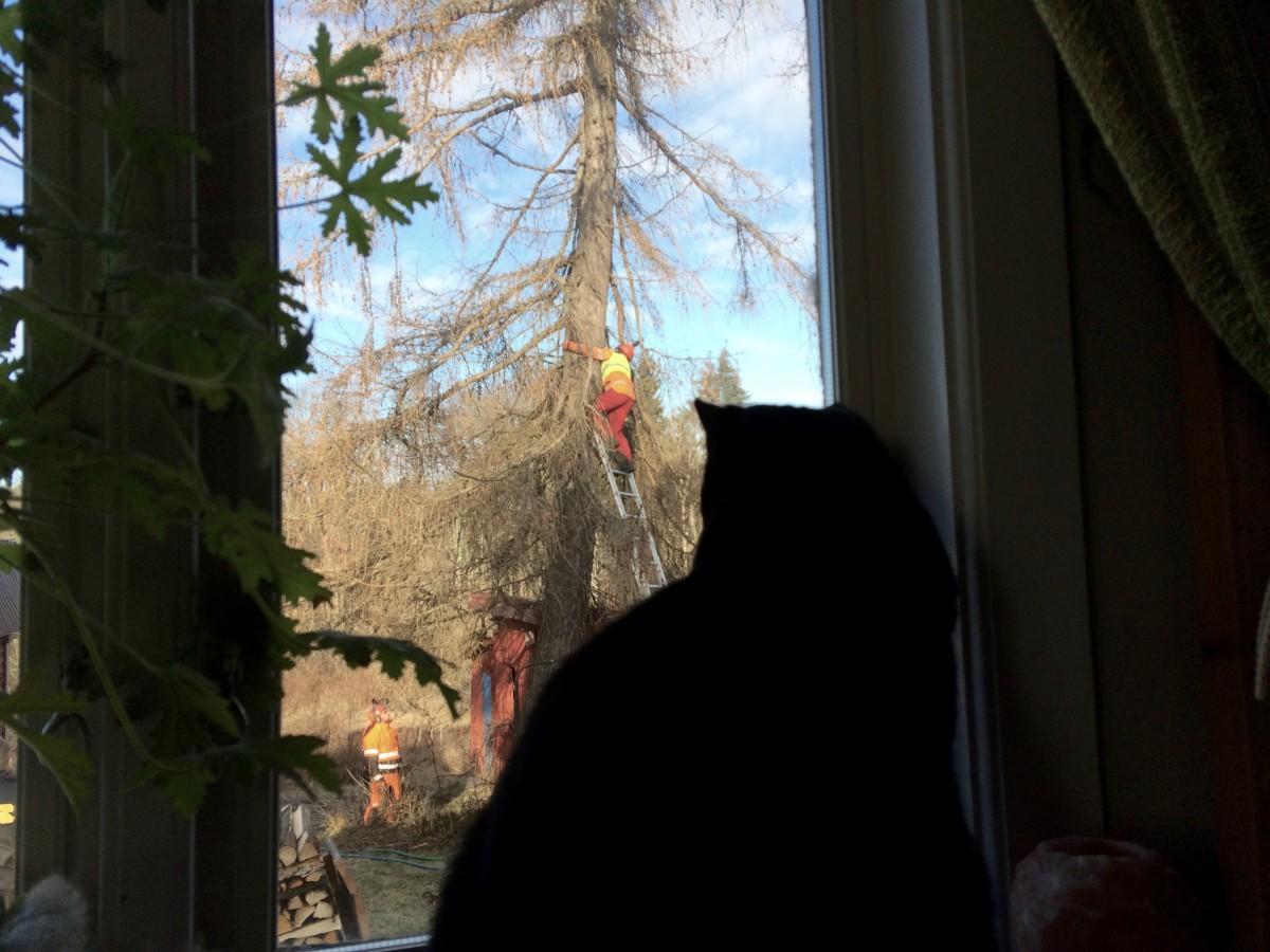 Tilda och utsikt genom fönstret