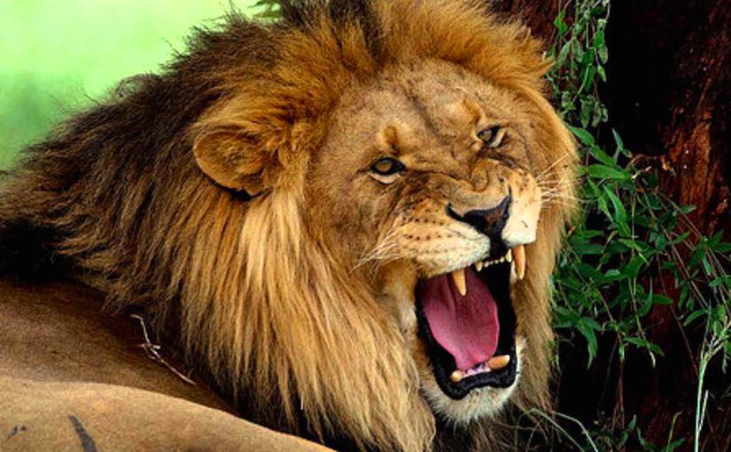 Lejonet på cykelbanan